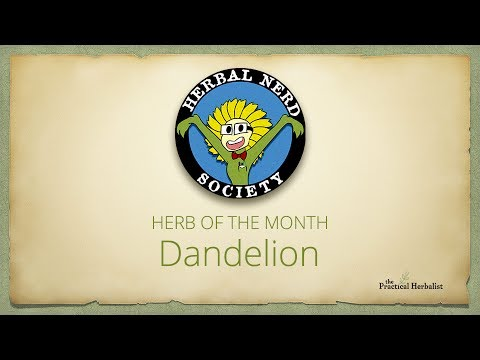 Herbal Nerd Society Herb of the Month Dandelion