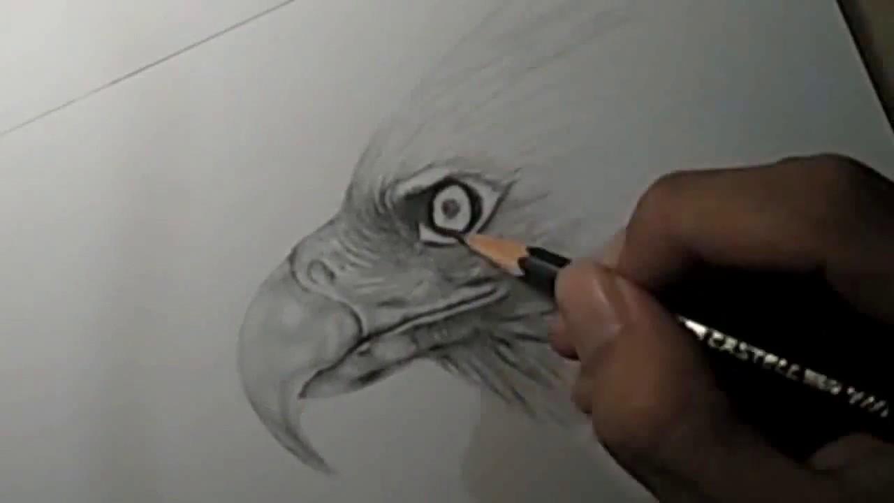 Speed Drawing Proses Menggambar Burung Elang Youtube