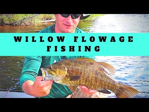 Willow Flowage Multi Species Fishing- Musky, Pike, Bass, And Even Bowfin?