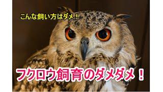 面白かったらチャンネル登録してください 【CuteペットCH】 ▽▽ちゃんねる...