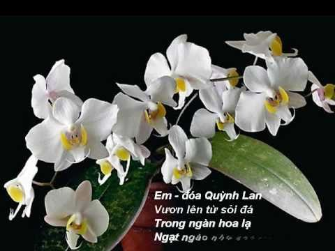 Em là đóa Quỳnh Lan - Karaoke - Sing Along Song - Orchids