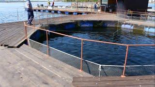 Рыбалка мечты. Форелевая ферма Иркутск. fishing dreams(, 2016-05-24T18:32:30.000Z)