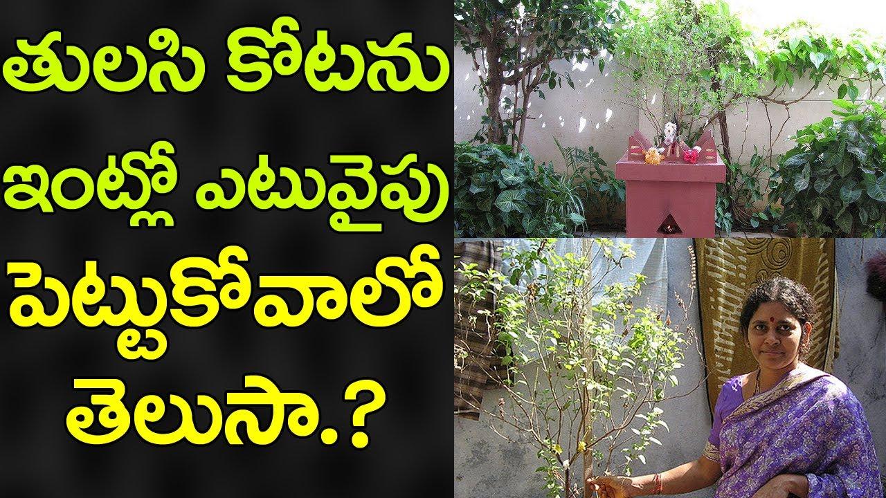 How to Grow Tulsi Basil : Planting Herbs - YouTube