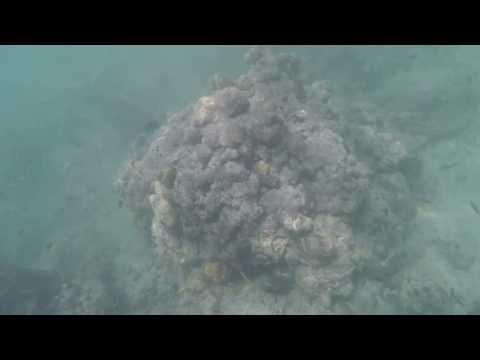 Thailand Phuket 2017 Kata Beach Snorkeling