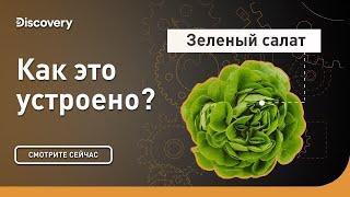 Зеленый салат | Как это устроено | Discovery