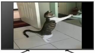 Animal Funny - Cat Fighting With Self