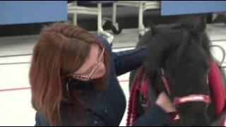 Mini Horse Is Service Animal for Alaska Boy
