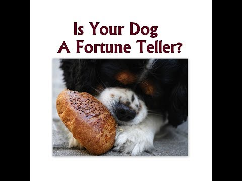 Ukrainian Fortune Telling With Your Dog