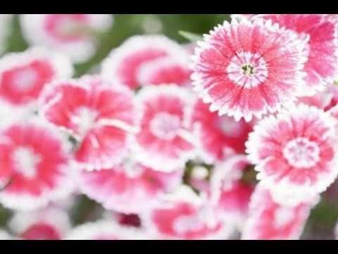 Odessa flowers