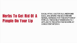 hq2 - How To Stop Pimples On Lip