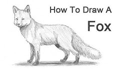 How to Draw a Fox (Red Fox)