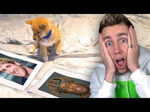 DOG PREDICTS KSI VS LOGAN PAUL