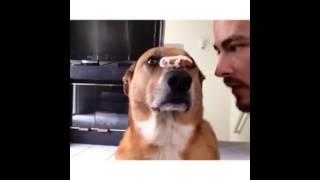 У собаки железная воля