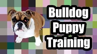 Cali The Bulldog Puppy Training Session!