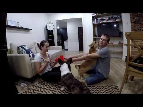 Вопрос: Какие гуманные методы дрессировки собак?