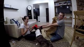 Фри-Шейпинг для собак