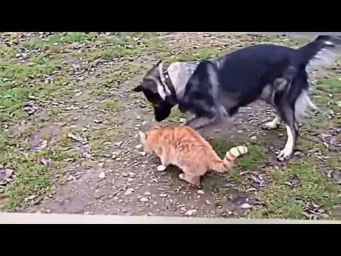 Cats vs Dogs Compilation 2014
