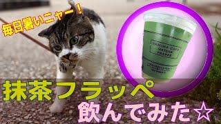 ファミマカフェ 抹茶フラッペ飲んでみた☆famima Cafe Matcha Frappe ファミリーマート