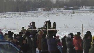 Зимние конные соревнование Шушенское 2016 (Horse–Animal-racing-конь-смотреть-онлайн-скачка)