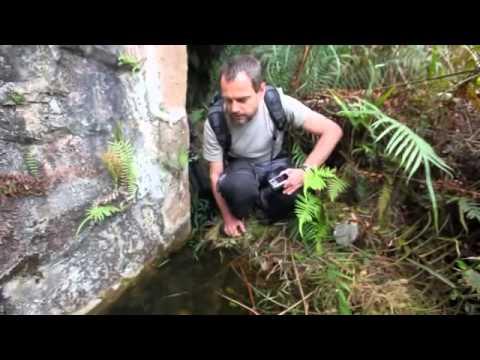 Hành trình tìm kiếm Tép Tiger (Tiger Shrimp) trong tự nhiên