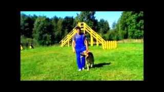 Курс ОКД, дрессировка собак