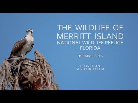 The Wildlife of Merritt Island NWR Florida
