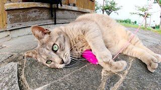 運動不足な灰色猫をおもちゃで遊ばせたら、すぐに疲れてしまった