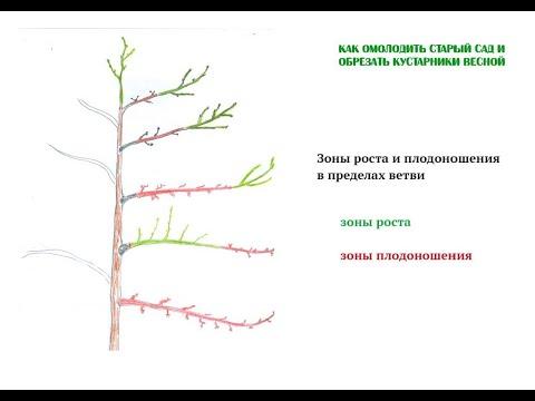 Строение плодового дерева. Знай свой сад || Ландшафтный Дизайн