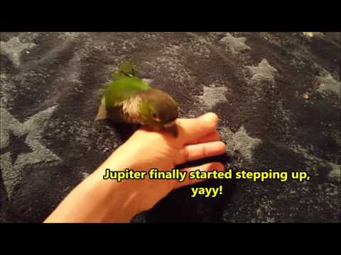A Day in the Life of a Conure