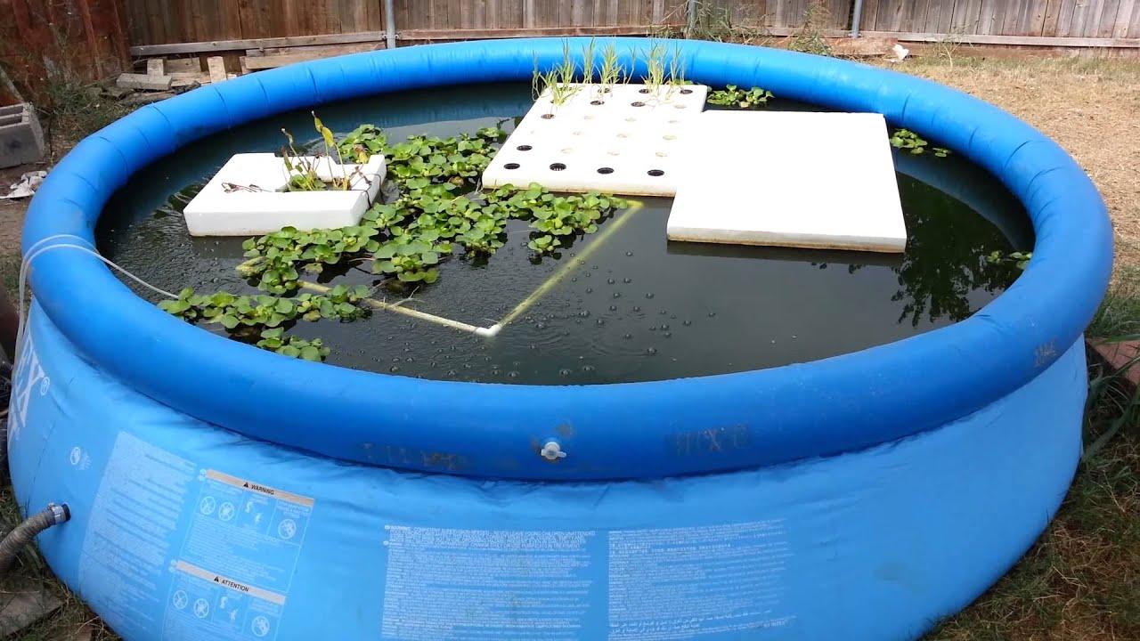 How Build Pond Fish Farming