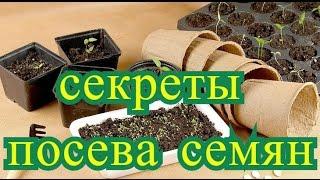 ☝Секреты посева семян и выращивания рассады.☝