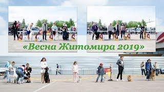 """Виставка собак всіх порід рангу САС WKU """"Весна Житомира 2019"""". 04.05.2019"""