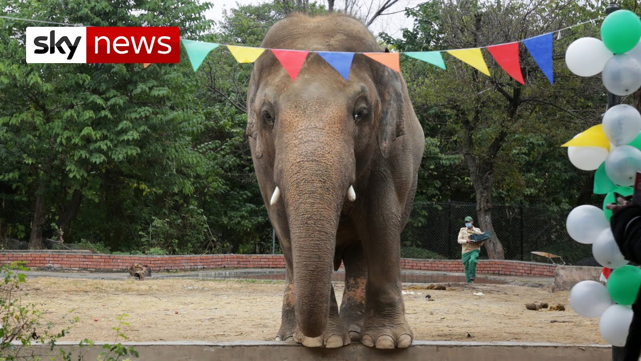 Cher helps rescue 'world's loneliest elephant' from Pakistan zoo - download from YouTube for free
