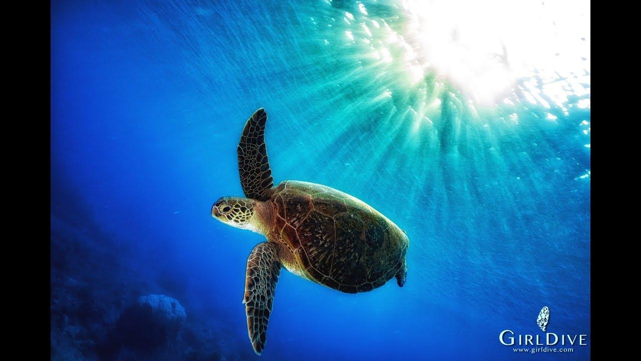 美人魚 海龜|臺灣 小琉球LIU QIU 自由潛水 海龜 旅行 女孩 - YouTube