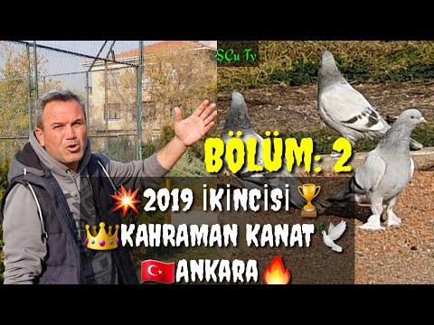 Видео: TÜRKİYE 2019 İKİNCİSİ KAHRAMAN KANAT TAKLA GÜVERCİN TOP 10 PIGEONS পায়রা PALOMAS कबूतर الحمام 鴿子 ハト