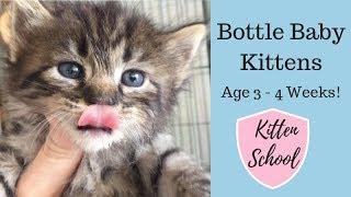 Bottle Baby Kittens - Still on the Bottle but Learning Litter Box!