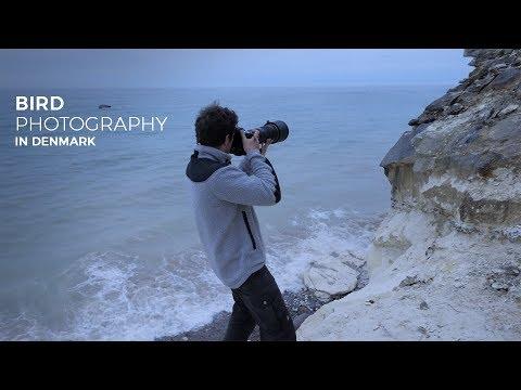 BIRD PHOTOGRAPHY In Denmark