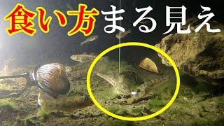 【ハゼ釣り研究の極み】ハゼ達の捕食行動を理解する