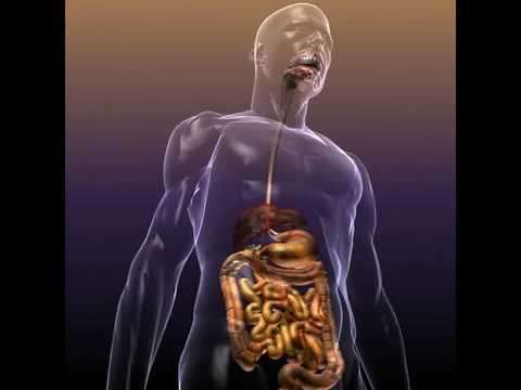 3d Model Of Human Anatomy Digestive System Review Youtube