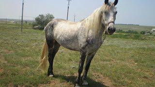 Белый конь и чёрный конь..