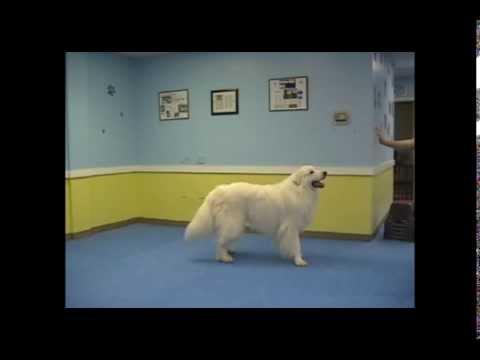 Champion Trick Dog