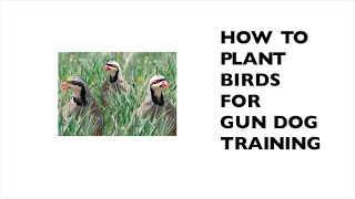 How To Plant Birds For Gun Dog Training