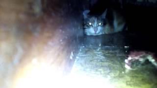 Кошка Херобрин лежит
