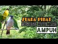 Suara Pikat Burung Kutilang Terbaru Ampuh  Mp3 - Mp4 Download