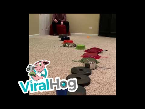 Scotty Page - Watch This: 12 Bounce Trick Shot