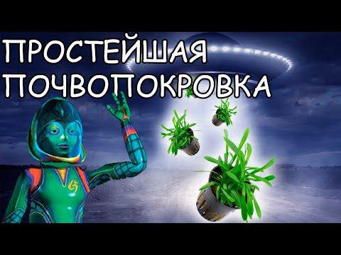 """САГГИТАРИЯ КАРЛИКОВАЯ. Sagittaria subulata """"Pusilla"""". СЕКРЕТЫ ВЫРАЩИВАНИЯ"""