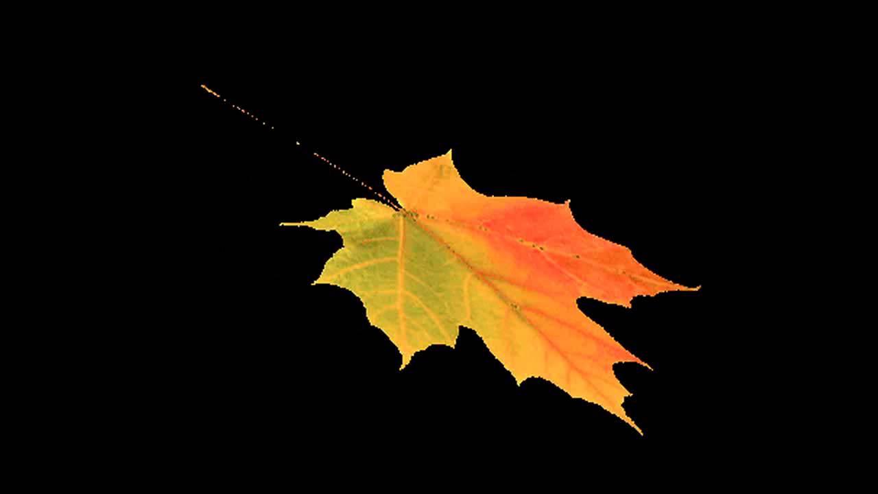 фото падающий лист