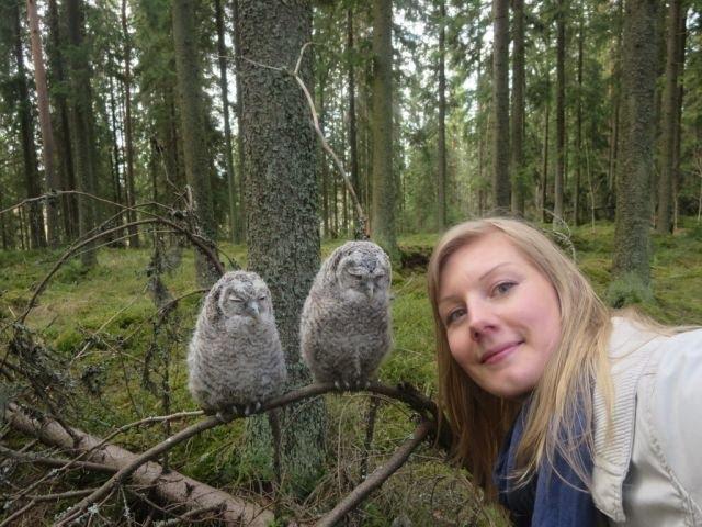 Jammaavat pikkupöllöt (Jamming baby owls)