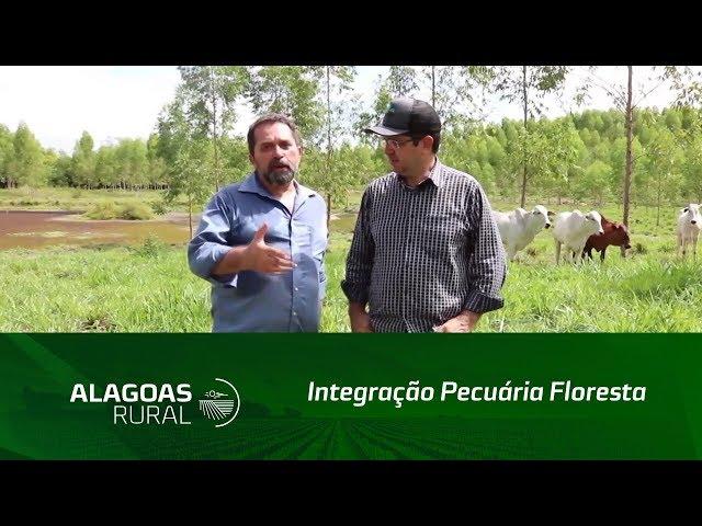 A integração floresta pecuária já é uma realidade em Alagoas