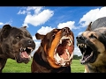 Rottweiler vs German Shepherd vs Cane Corso - Attacking Style Protection Work [Mr Friend]